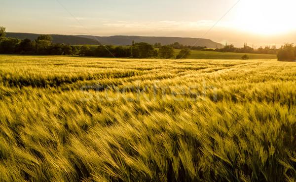 Cereal campo grama folha fazenda nuvem Foto stock © digoarpi