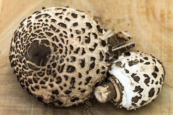 パラソル キノコ クローズアップ 森林 工場 白 ストックフォト © digoarpi
