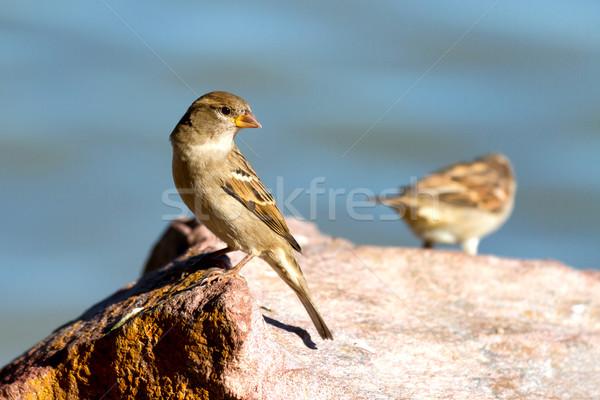 Jovem beira-mar pedra olho verão pássaro Foto stock © digoarpi
