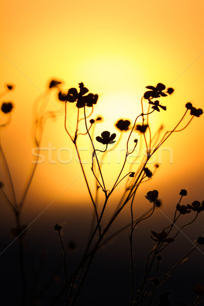 закат трава пейзаж замечательный свет весны Сток-фото © digoarpi