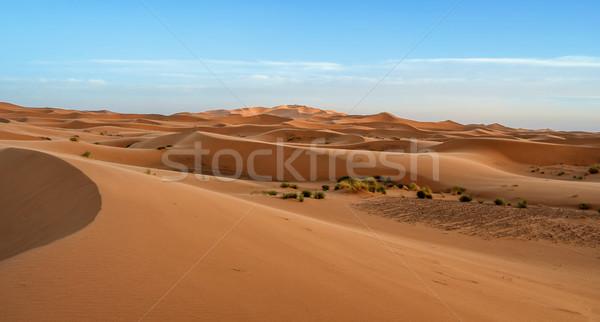 Sahara mooie zand blauwe hemel landschap zomer Stockfoto © digoarpi