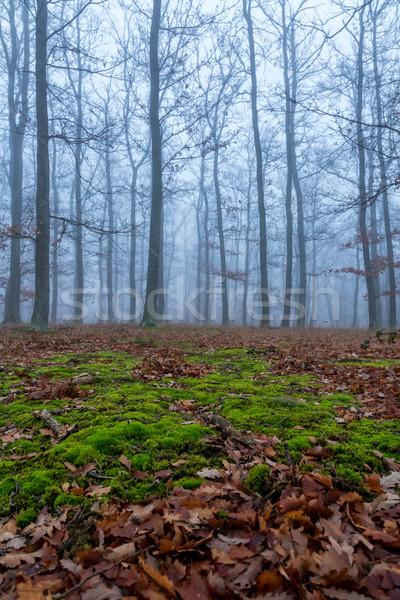мистик туманный день дуб лес дерево Сток-фото © digoarpi