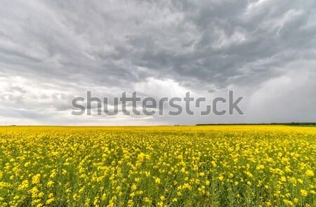 области пейзаж небе цветок трава фон Сток-фото © digoarpi