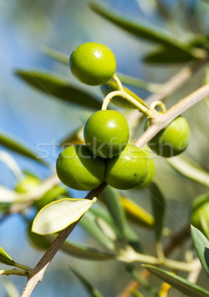 Olives Stock photo © digoarpi