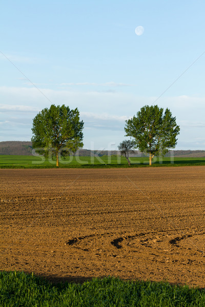 Stockfoto: Landschap · agrarisch · twee · bomen · hemel · boom