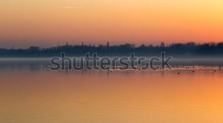 Coucher du soleil lac Balaton Hongrie oiseaux automne Photo stock © digoarpi