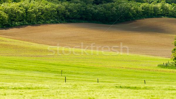 пахать области красивой землю небе природы Сток-фото © digoarpi