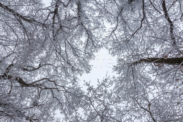 Zamrożone lasu mętny zimno dzień niebieski Zdjęcia stock © digoarpi