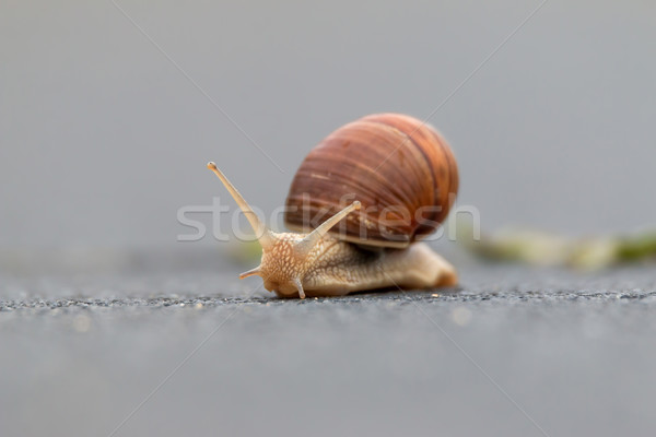 улитки спираль природы зеленый животного римской Сток-фото © digoarpi