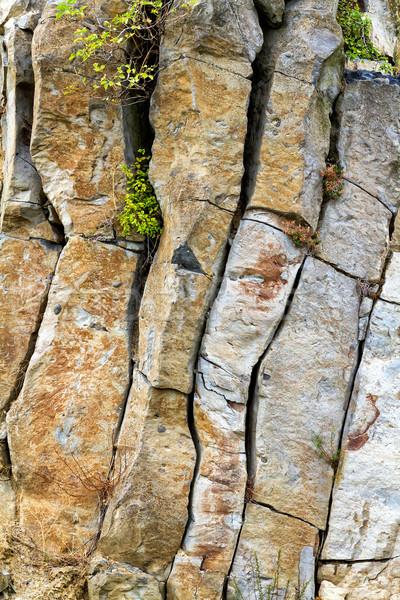 Basalt interessant Ungarn Baum Natur Berg Stock foto © digoarpi