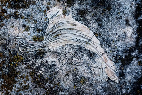 Fossiel oppervlak steen dier slak Stockfoto © digoarpi