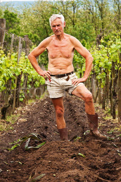 Senior farmer Stock photo © digoarpi