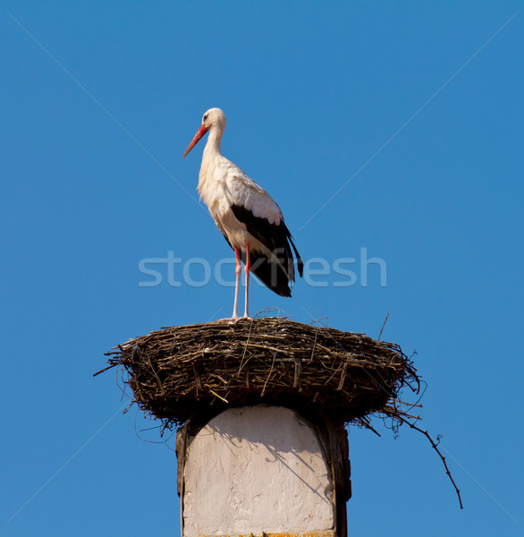 Stork Stock photo © digoarpi