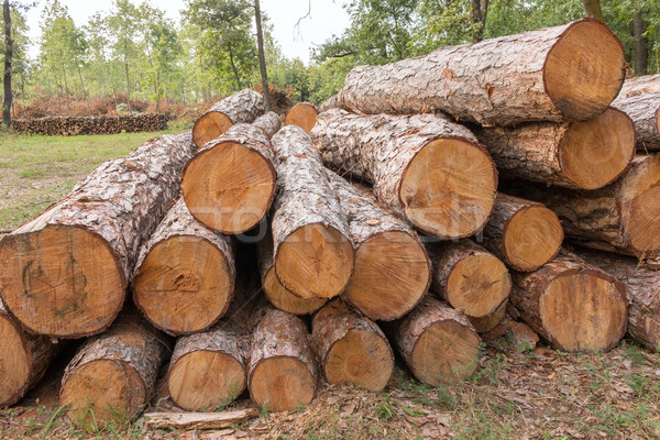 Nagy köteg fa erdő fa út Stock fotó © digoarpi