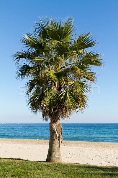 Palmeira belo praia céu paisagem mar Foto stock © digoarpi