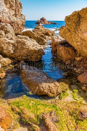 Pormenor espanhol costa árvore mar verão Foto stock © digoarpi
