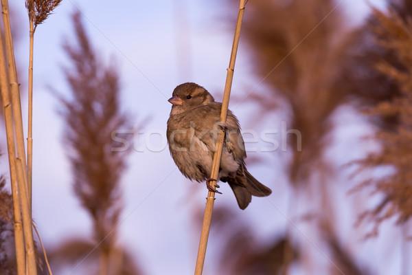 молодые женщины воробей природы красоту птица Сток-фото © digoarpi