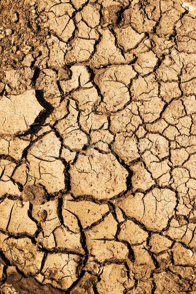 Secar solo verão quebrado sujeira Foto stock © digoarpi