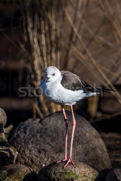Pássaro água aves animais animal projeto de lei Foto stock © digoarpi