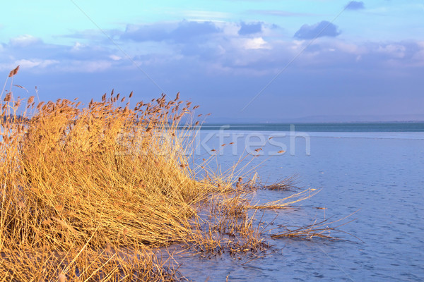 Sunset in winter from a froze lake with reed Stock photo © digoarpi