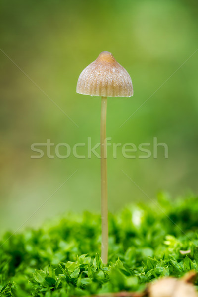 菌 美しい 森林 キノコ 苔 木材 ストックフォト © digoarpi