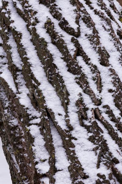 Fechar carvalho inverno árvore natureza beleza Foto stock © digoarpi
