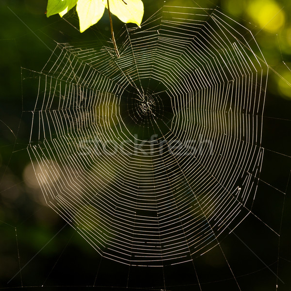 spider's web Stock photo © digoarpi