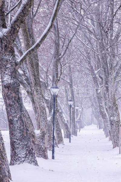 Beco dia árvore natureza paisagem neve Foto stock © digoarpi
