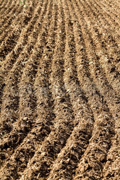 Eke egy mezőgazdasági munka textúra természet Stock fotó © digoarpi