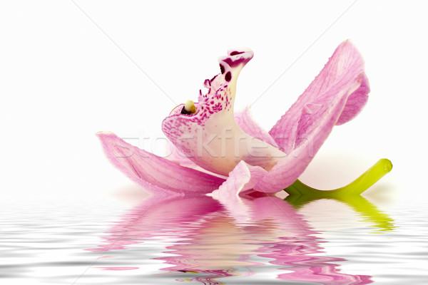 Orchidea bella rosa bianco texture natura Foto d'archivio © digoarpi