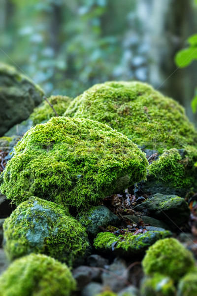 Covered rocks with moss  Stock photo © digoarpi
