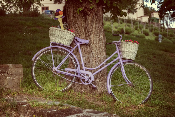 Old bicycle an old tree in Village Tihany of Hungary Stock photo © digoarpi