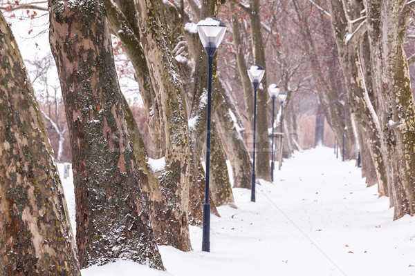 Alley in snowy a day from Hungary Stock photo © digoarpi