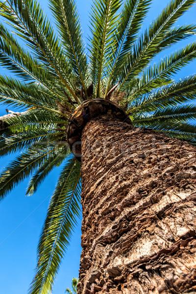 Palmera verano verde planta tropicales Foto stock © digoarpi