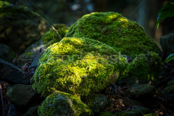 Gedekt rotsen mos bos groene steen Stockfoto © digoarpi