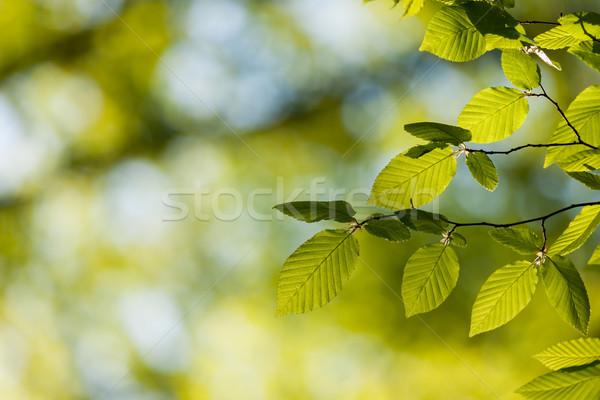 Mooie harmonisch bos detail bladeren boom Stockfoto © digoarpi