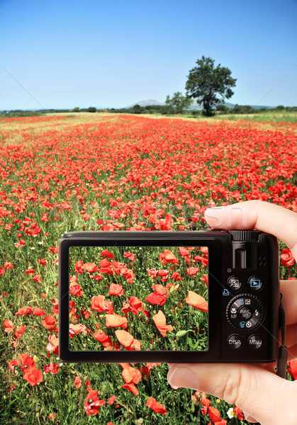 Camera poppy veld hand Stockfoto © Dinga