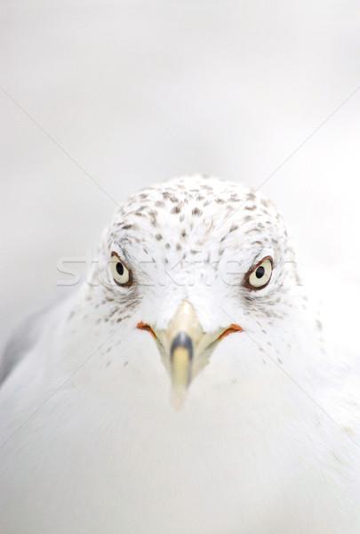 鴎 クローズアップ 目 自然 動物 近い ストックフォト © Dinga