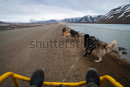 Summer dog sledding, first person perspective Stock photo © dinozzaver