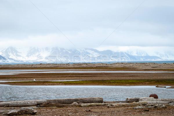 Sarkköri nyár víz tájkép tenger hó Stock fotó © dinozzaver