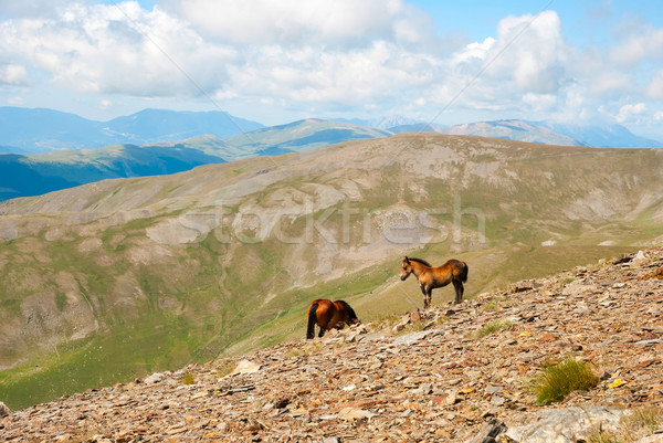 Horses in the Pyrenees mountains, Spain Stock photo © dinozzaver