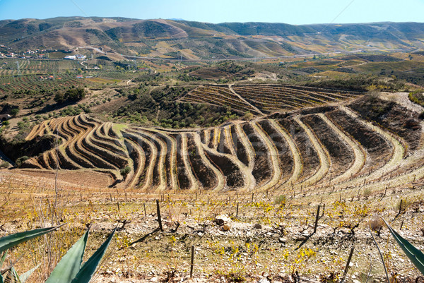 Vineyards at Douro river valley, Portugal Stock photo © dinozzaver