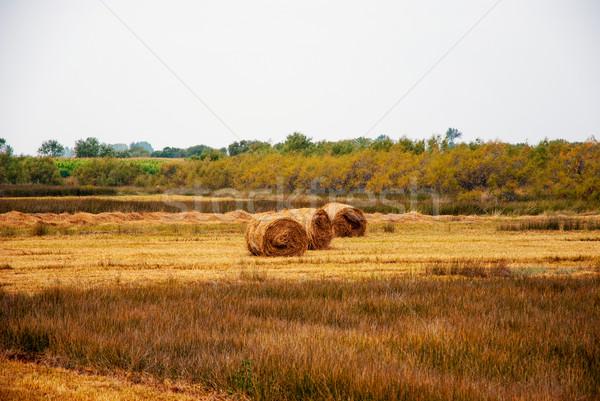 Széna legelő ősz étel fű természet Stock fotó © dinozzaver