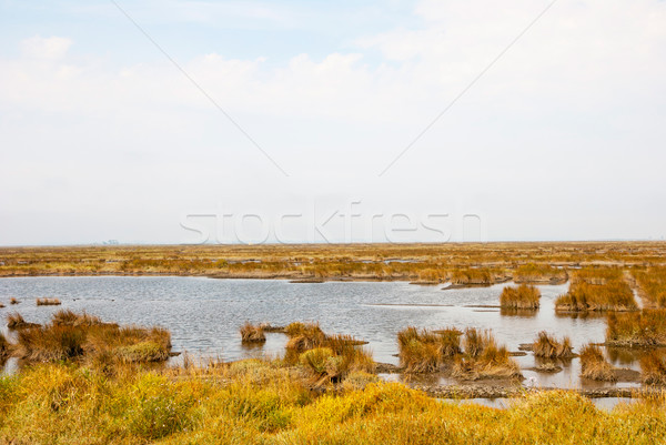 Stock photo: Marsh with water and grass of rio Averio, Portugal