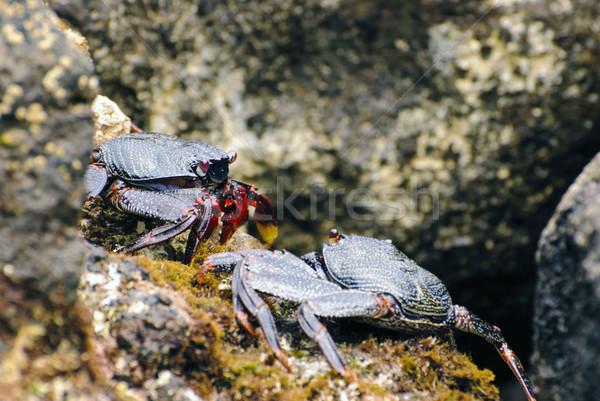 Wild strand rock benen strijd shell Stockfoto © dinozzaver