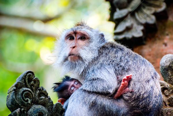Aap borstvoeding baby buitenshuis gezicht bos Stockfoto © dinozzaver