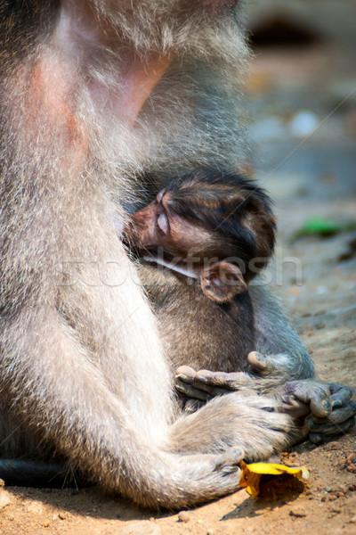 Macaco amamentação bebê ao ar livre cara floresta Foto stock © dinozzaver