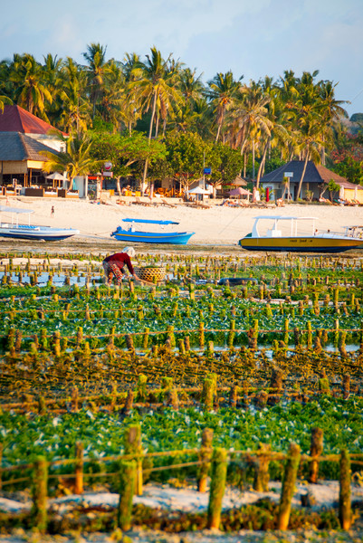 Boerderij veld Indonesië water voedsel werk Stockfoto © dinozzaver