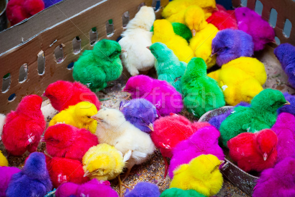 Colored baby chicken in bird market, Indonesia Stock photo © dinozzaver