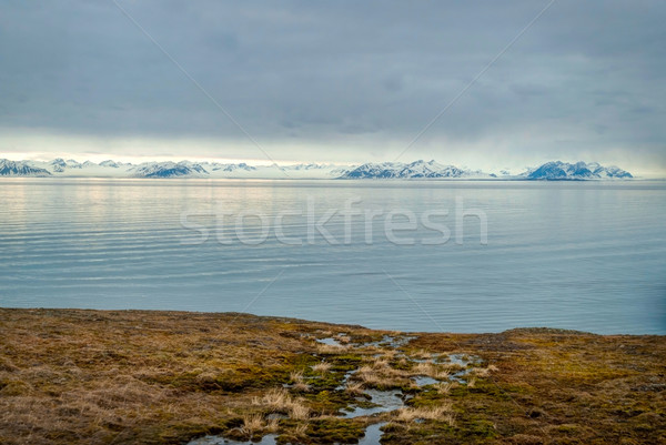 Arctic tundra with snowy mountains and ocean Stock photo © dinozzaver